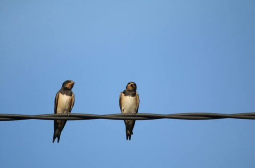 Two Swallows Trading