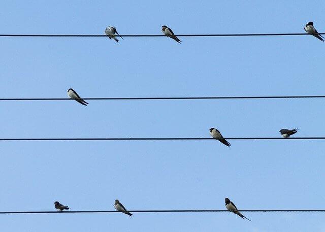 8 Swallows Betfair Trading